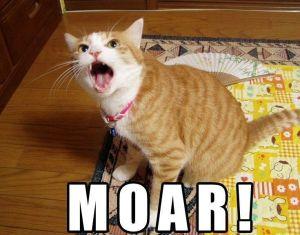 moar-cat